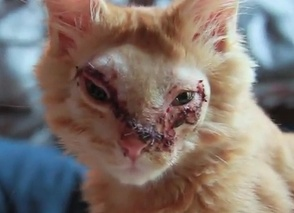 The Wounded Faceless Kitten Is Given A New Face (VIDEO)